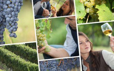 Amateurs de box vin, connaissez-vous le parrainage de pieds vigne ?