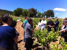 Découverte entretien de la vigne