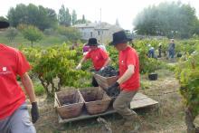 Parrainage de pieds de vignes Covigneron au Domaine Jaume
