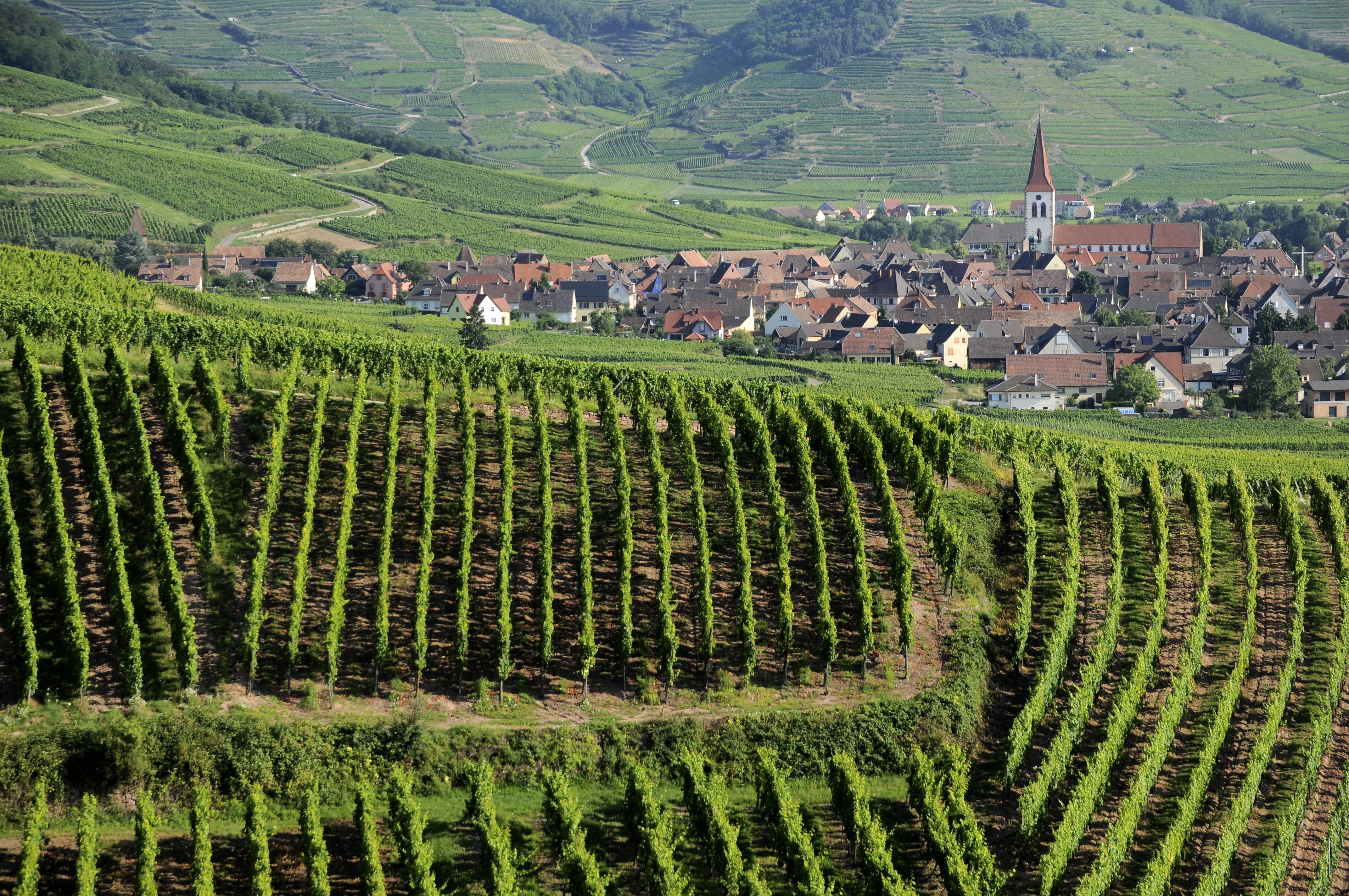 Parrainage de pieds de vignes au Domaine Jean Baptiste ADAM