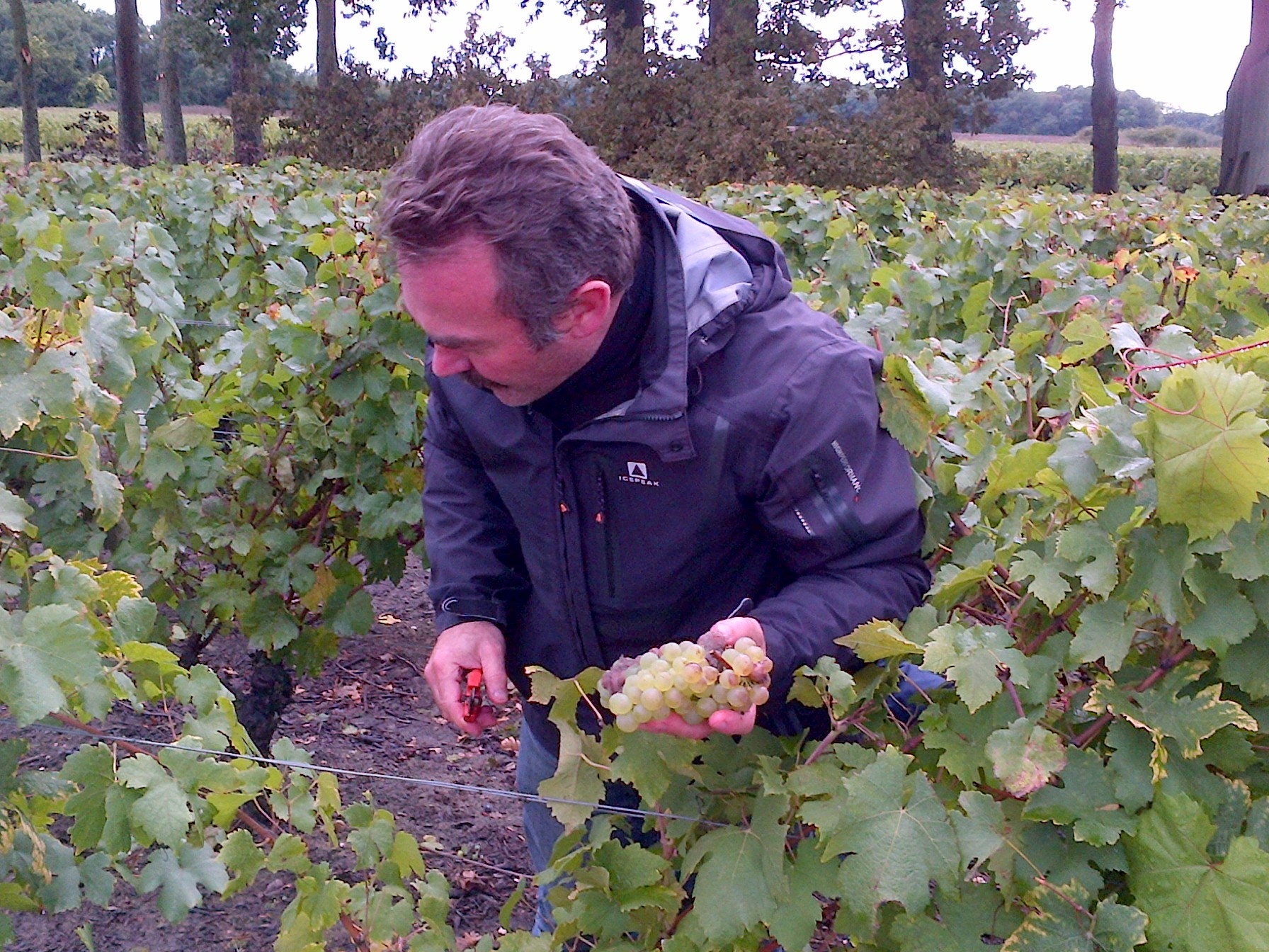 Parrainage de pieds de vignes au Domaine de Rabelais à Onzain