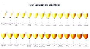 Nuancier vin blanc2