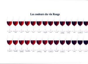 Nuancier vin rouge2
