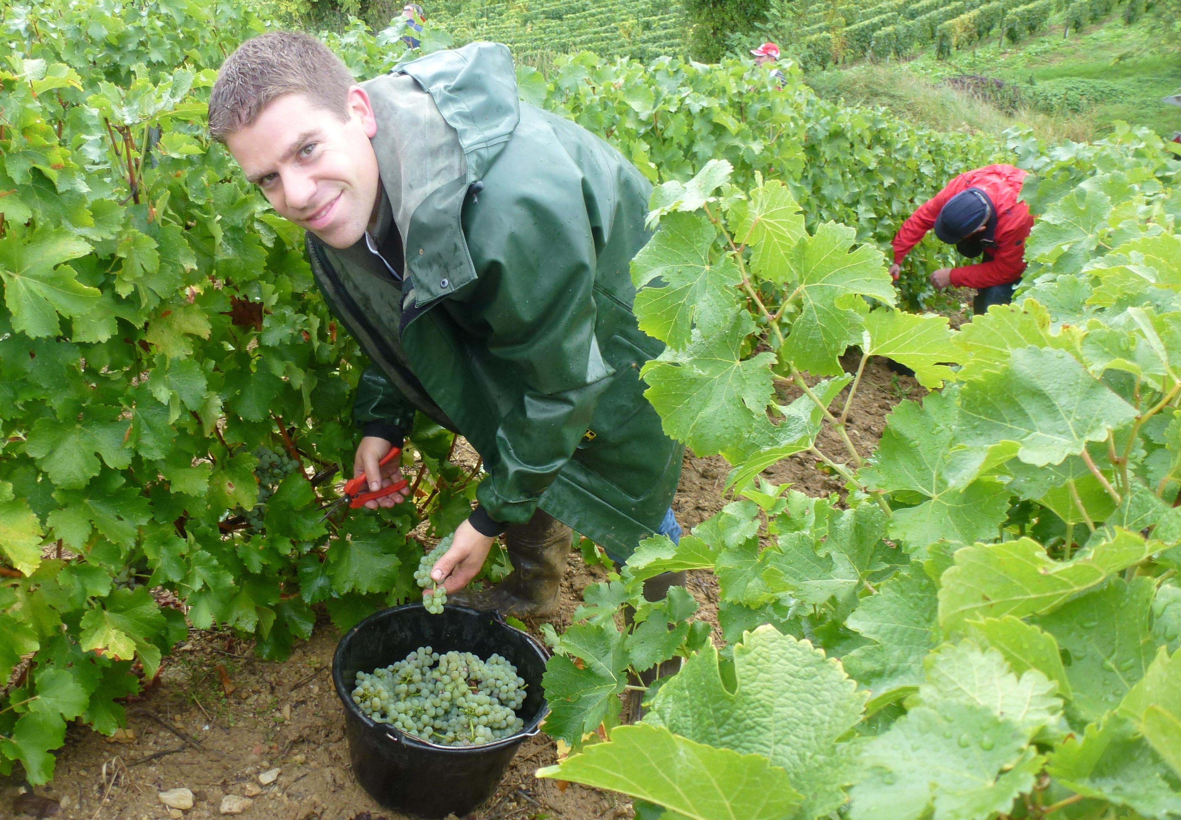 Parrainage de pieds de vignes au Domaine Godon