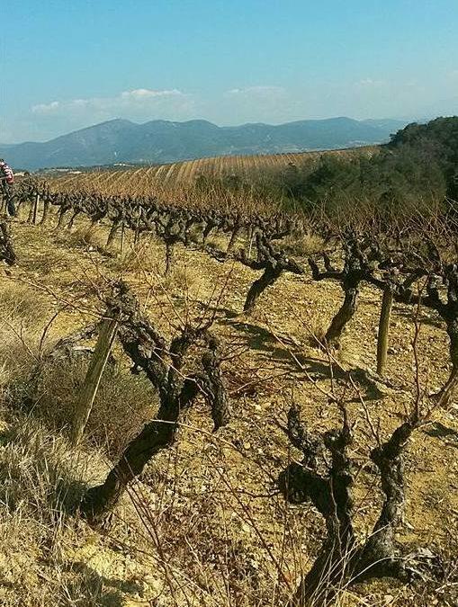 Apprendre la vigne et vin