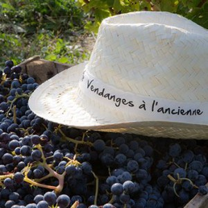Vendanges et Vignobles