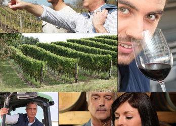 Le parrainage de pieds de vignes Covigneron, des moments et des vins d'exception avec un vigneron !