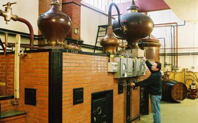 Le Colombard un des cépages du Cognac.
