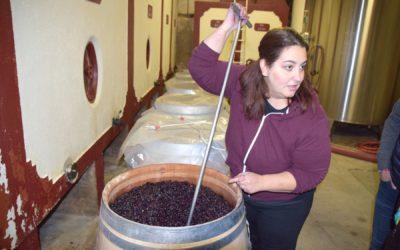 Les étapes clés de la vinification