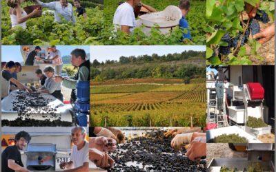 Cépages de Bourgogne : présentation