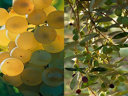 Découverte Vin et Olive en Provence