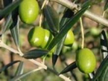 Pass la Vigne et l'olivier