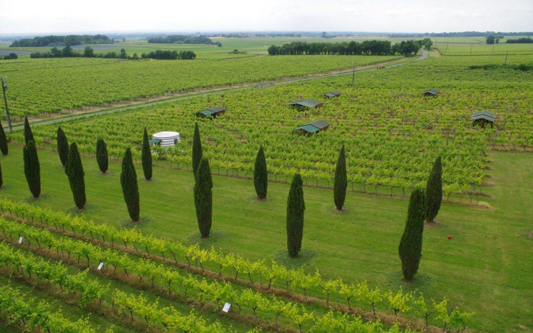 Découverte de la culture de la vigne