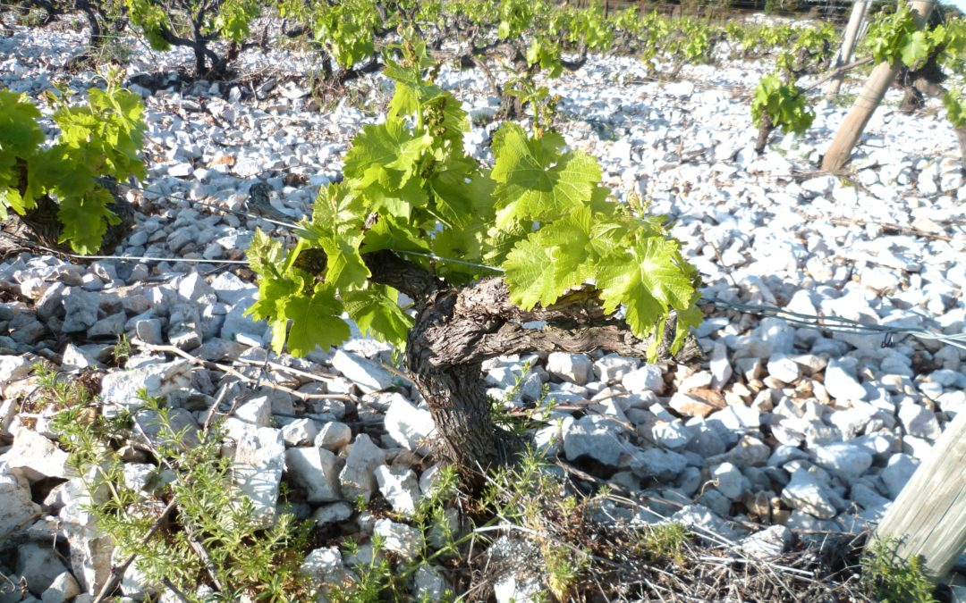 Découverte des travaux en vignes