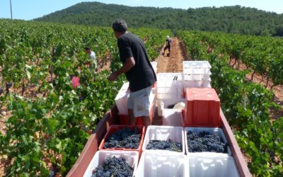 Vendanges : l'importance du pressoir