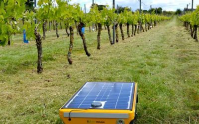 La technologie au secours des vignes