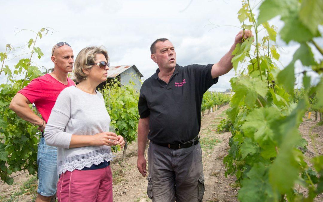 Découverte des travaux en vigne