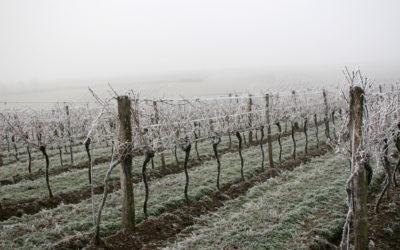 Recette naturelle contre le gel de la vigne