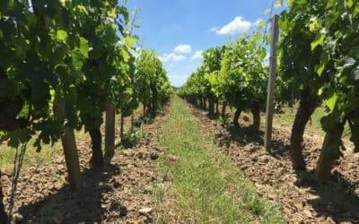 Une approche plus scientifique des bénéfices de la biodynamie sur la vigne