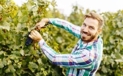 Comment rendre visite à un vigneron?