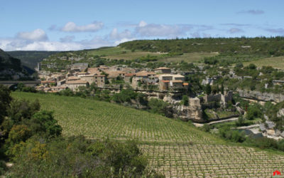 AOC Minervois, une appellation hors du temps