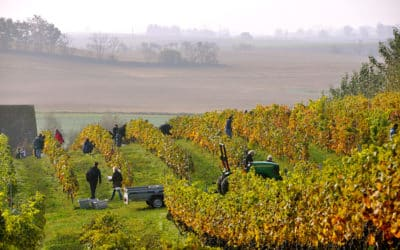 Tour du monde des vignobles : la Suède