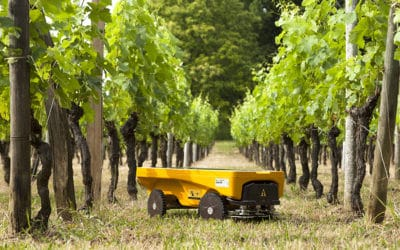 Innovation : le Vitrirover, un robot tondeuse aux pieds des vignes