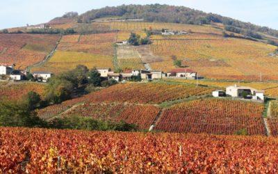 Le Côte-de-Brouilly, un vin rouge d'exception au coeur du Beaujolais
