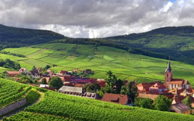 Les blancs d'Alsace, des accords met-vin surprenants