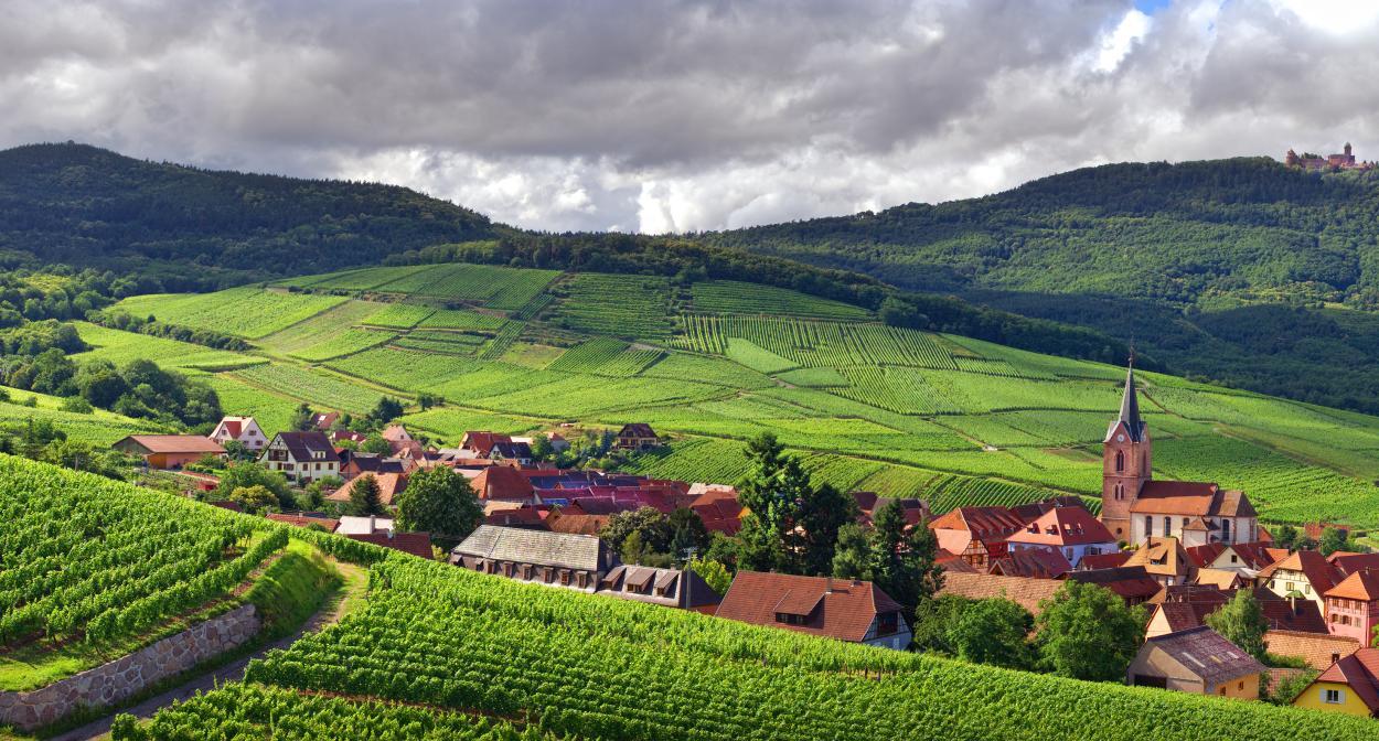 blancs d'Alsace