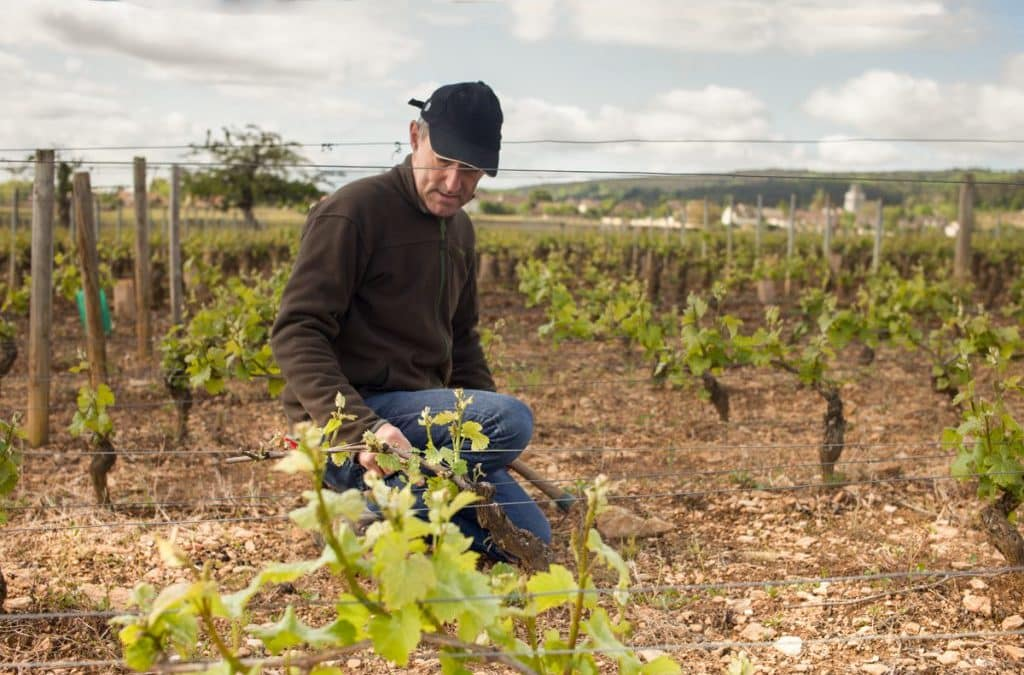 Découverte du métier de vigneron