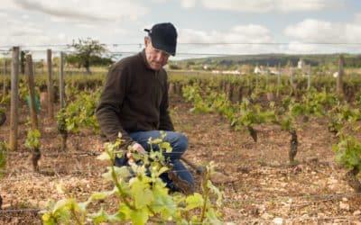 Clos Saint Louis: de nouveaux pieds de vigne à parrainer en Bourgogne!