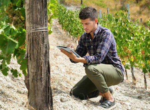 Covigneron vin de mes vignes