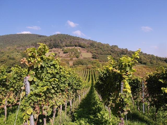 tms travail viticole