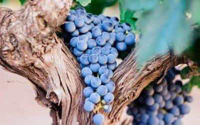 Le vin de Bordeaux