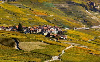 Le Lavaux: à la découverte de ce vignoble classé au Patrimoine Mondial de l'UNESCO
