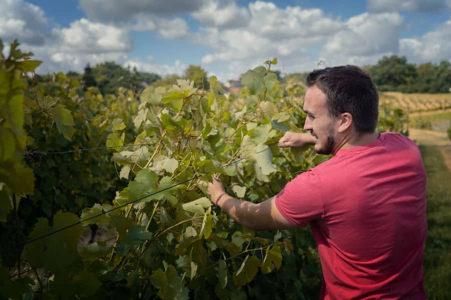 Covigneron domaine pierre bertrand Couly
