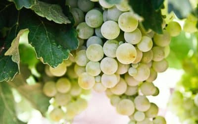 Vin de la Loire et appellation Vouvray